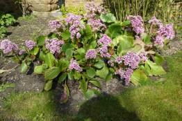 2017. 03. 26 - Holy Trinity garden (PL) (2) - Reduced Copy